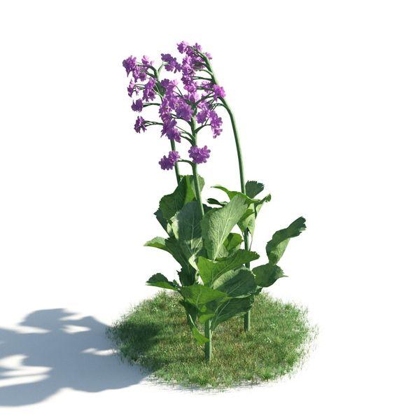 plant 10 AM183 Image 1