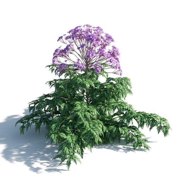 plant 11 AM183 Image 1