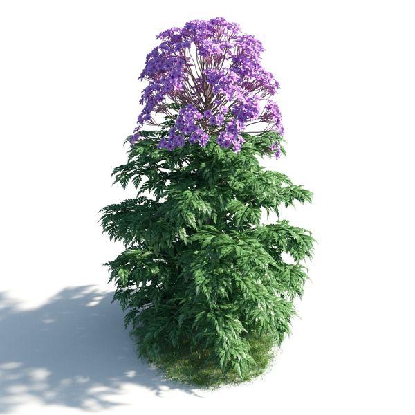 plant 12 AM183 Image 1