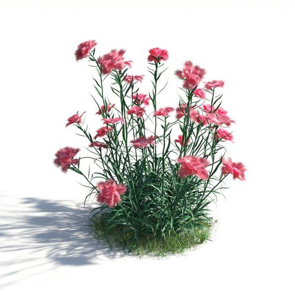 plant 13 AM183 Image 1