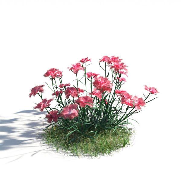 plant 14 AM183 Image 1