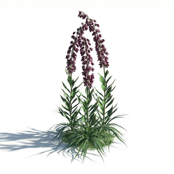 plant 18 AM183 Image 1