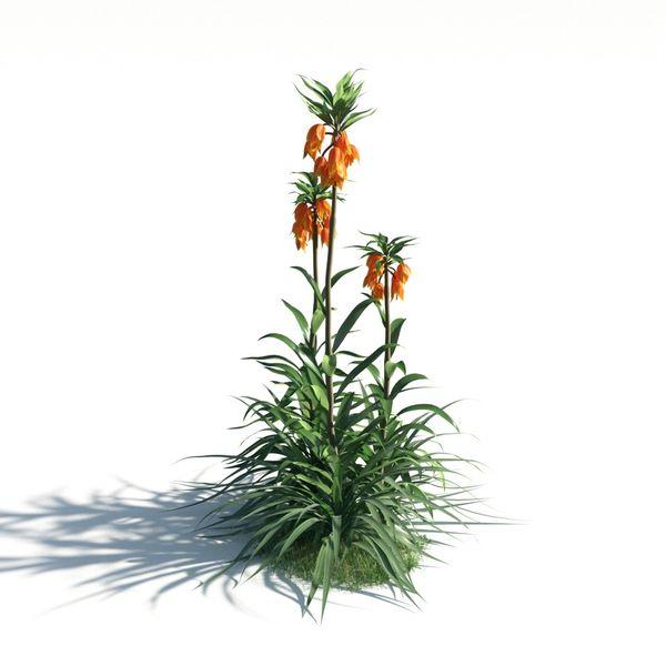 plant 20 AM183 Image 1