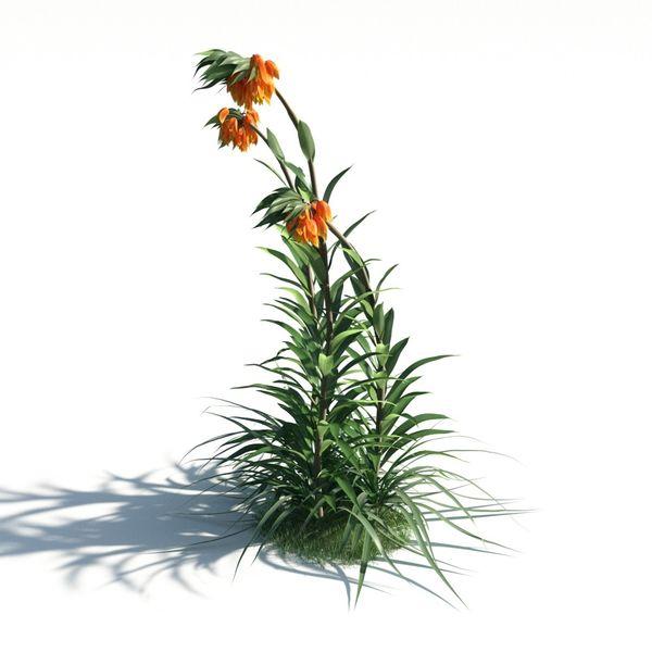 plant 21 AM183 Image 1
