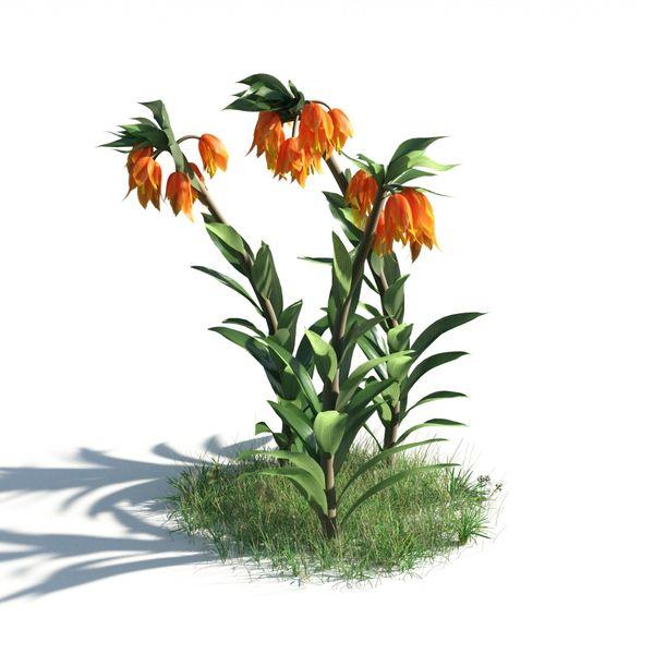plant 22 AM183 Image 1