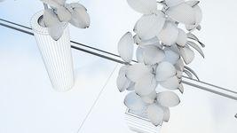 VP Ficus Elastica