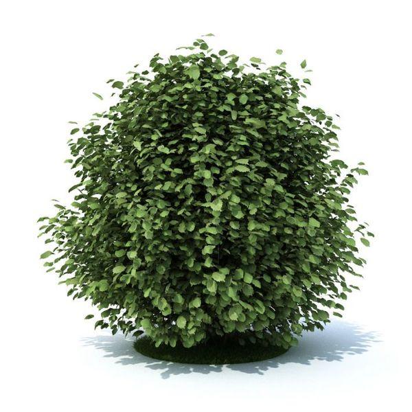 plant 20 am105 image 0