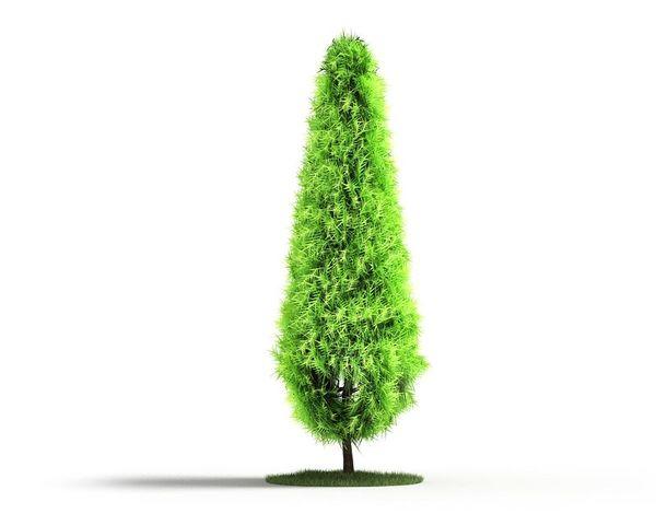 Plant 27 AM04 C4D image 0