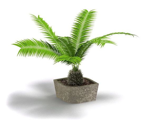 Plant 54 AM04 C4D