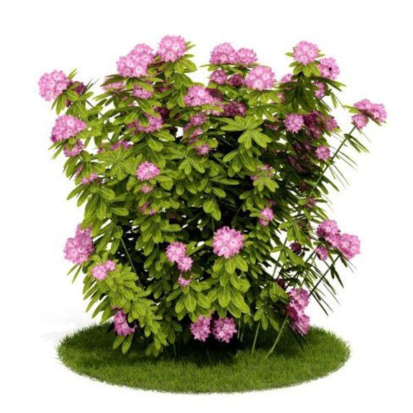 Plant 19 AM52 C4D image 0