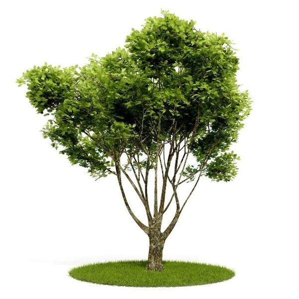 Plant 11 AM52 C4D image 0