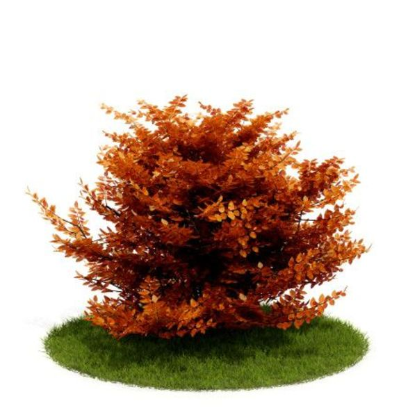 Plant 14 AM52 C4D image 0