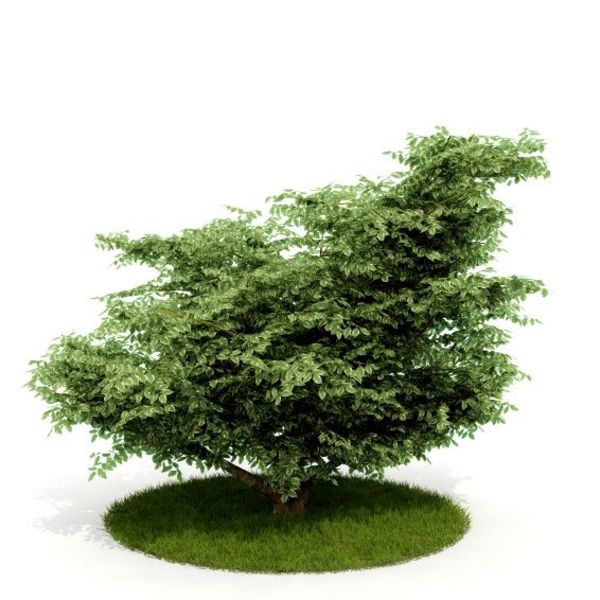 Plant 08 AM52 C4D image 0