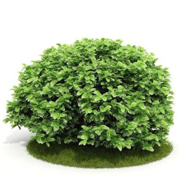 Plant 48 AM52 C4D