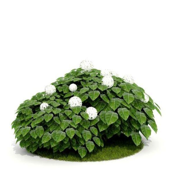 Plant 16 AM52 C4D image 0