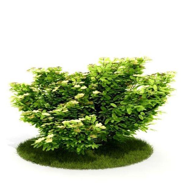 Plant 26 AM52 C4D image 0