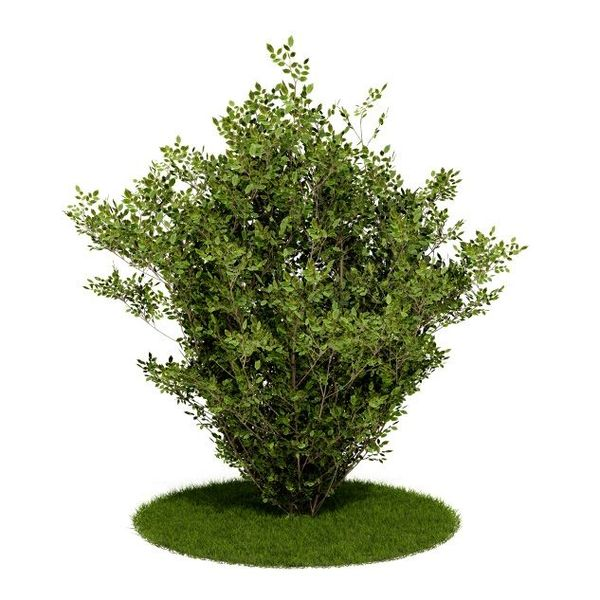 Plant 05 AM52 C4D image 0