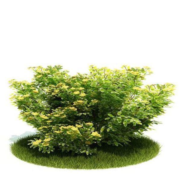 Plant 26 AM52 image 0