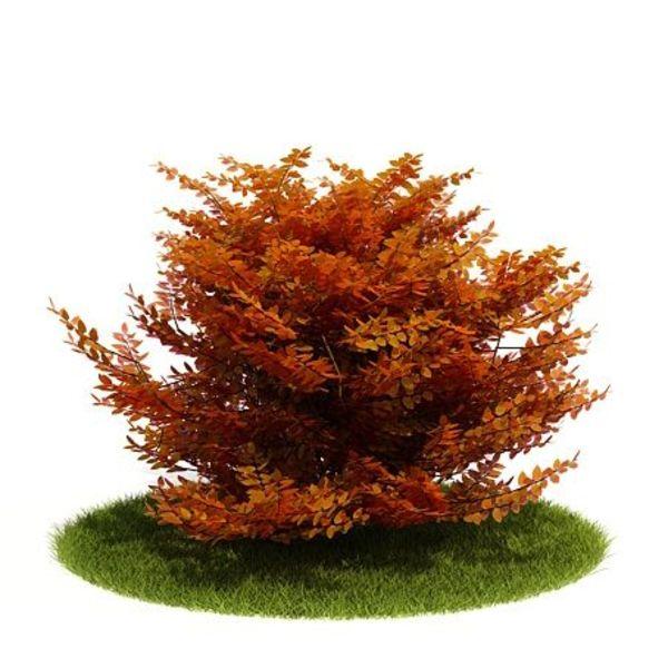 Plant 14 AM52 image 0