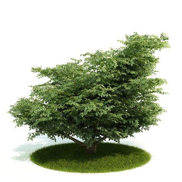 Plant 08 AM52 image 0