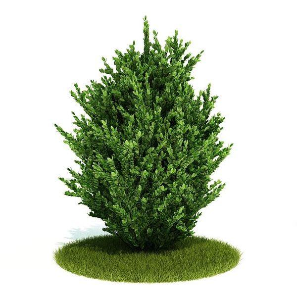 Plant 06 AM52 image 0
