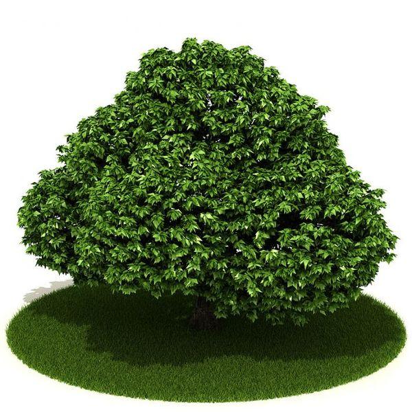 Plant 18 AM42 image 0