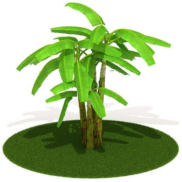 Plant 12 AM42 image 0