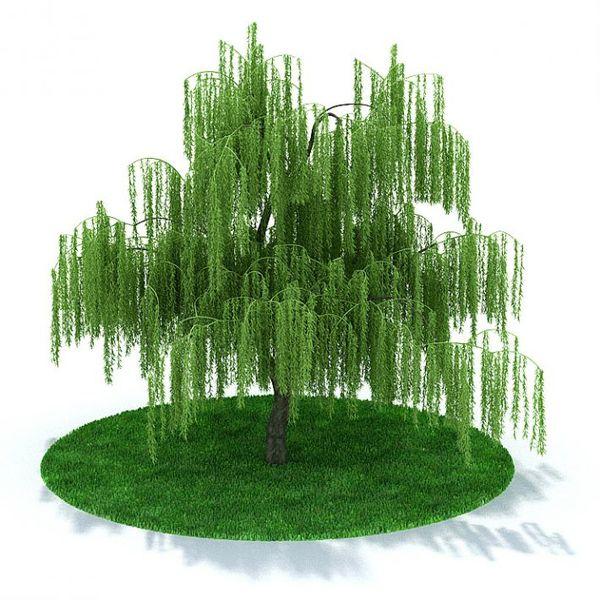 Plant 03 AM31 image 0