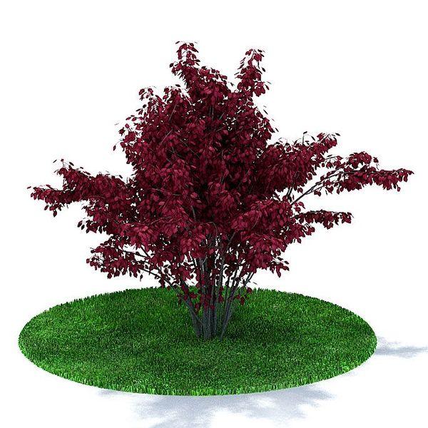 Plant 10 AM31 image 0