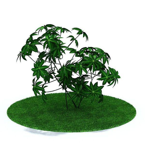 Plant 24 AM31 image 0