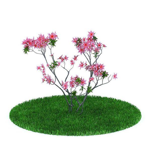 Plant 26 AM31 image 0