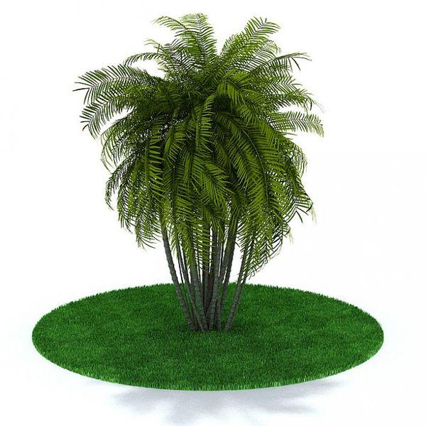Plant 13 AM31 image 0