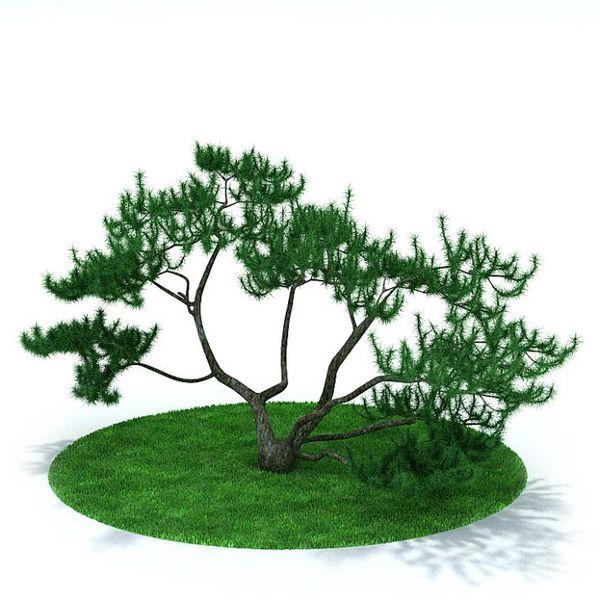 Plant 04 AM31 image 0