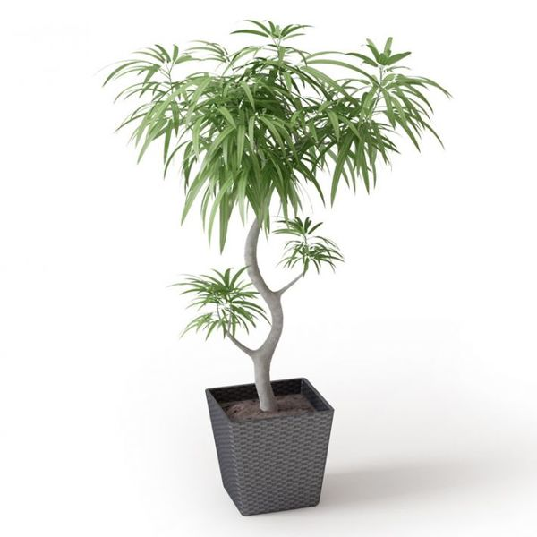 Plant 42 Archmodels vol  66