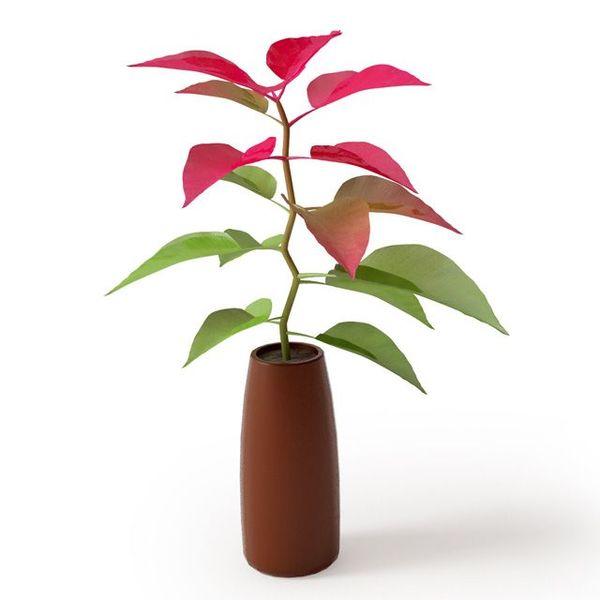 Plant 06 Archmodels vol. 66 image 0